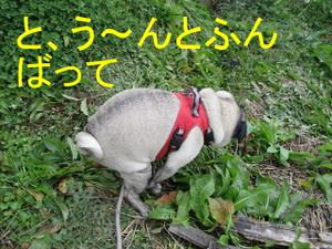 Img_6444