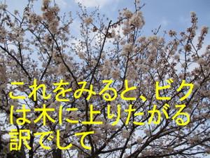 Img_7680